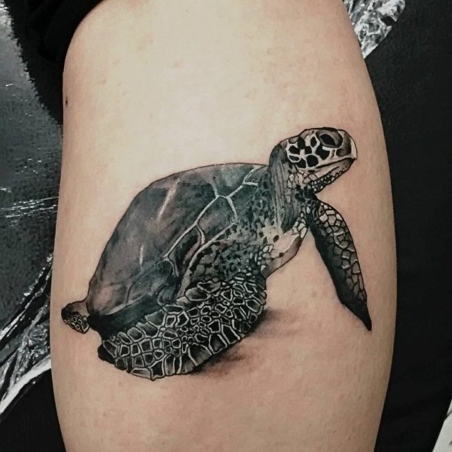 50 delightful turtle tattoo ideas the way to express wisgom and loyalty. Black Bedroom Furniture Sets. Home Design Ideas